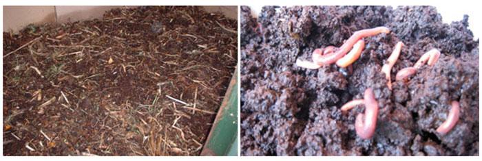 vermi compost pits